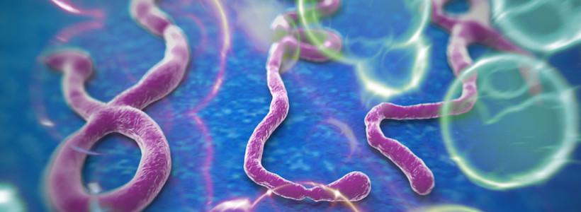 Serologie boli infectioase